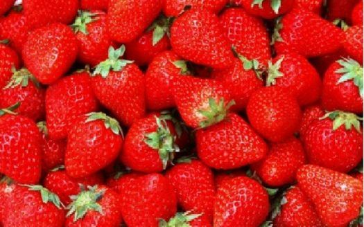 finca de fresas en Huelva