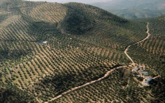 finca de olivar