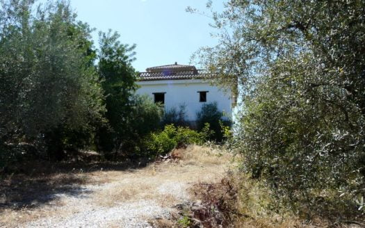 Finca-Obstbaume-Rohbau-Haus-Periana-Andalusien-03