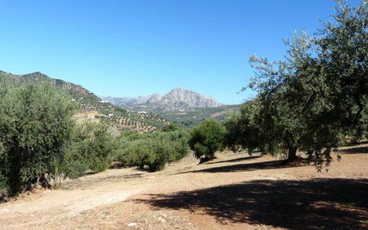 Olivenfinca-Ruina-Periana-Andalucia-01