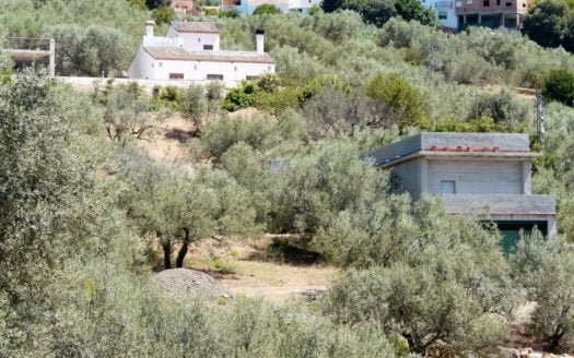 Lagerhaus-Oliven-Obstbaeume-Periana-Andalusien-02